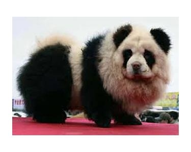 auction site quibids panda dog