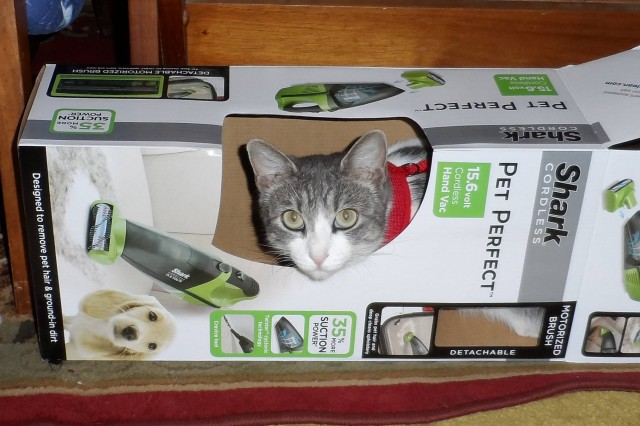 """My Shark cordless vac. came the other day and it sure does work great. But Henry does not like it. Took off running. She rather have the box  Wishing best of luck to all bidding! Have a wonderful day!"" - John K."
