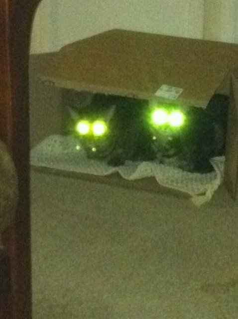 """To start your day with a little smile...here's an extra perk of shopping at QuiBids...you get a gift for someone you love and a new favorite home for your two furry babies (a two-""fur"")...interesting how a Q box makes my cats radioactive."" - Denise A."
