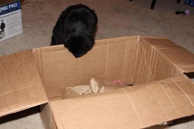 """'Meow! So what did you get this time?' Charlize loves jumping into boxes, so thank you QuiBids for bring a lot of joy for my cat!"" - Hanna H."