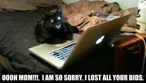 Cat loses your bids on laptop quibids meme