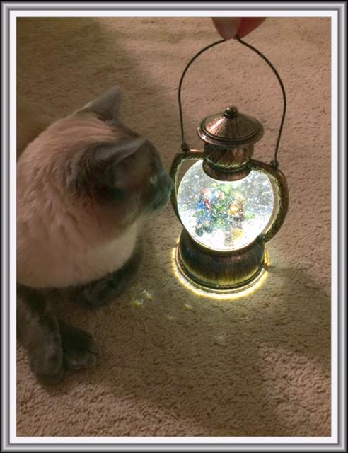 Wendi's cat loves the light up snow globe she won on QuiBids!
