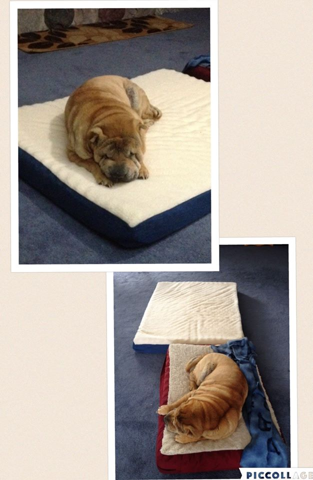 Janise used 4 real bids and 58 voucher bids to win this pet bed for only $3.19! #QuiBidsWin
